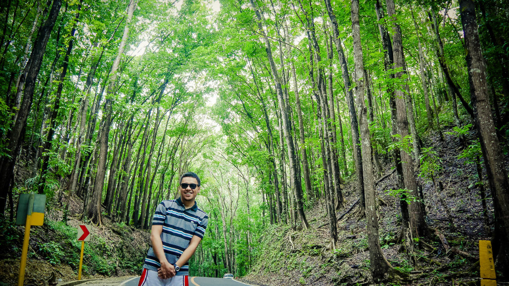 A man-made mahogany forest stretching in a two-kilometer stretch of densely planted Mahogany trees located in the border of Loboc and Bilar towns.