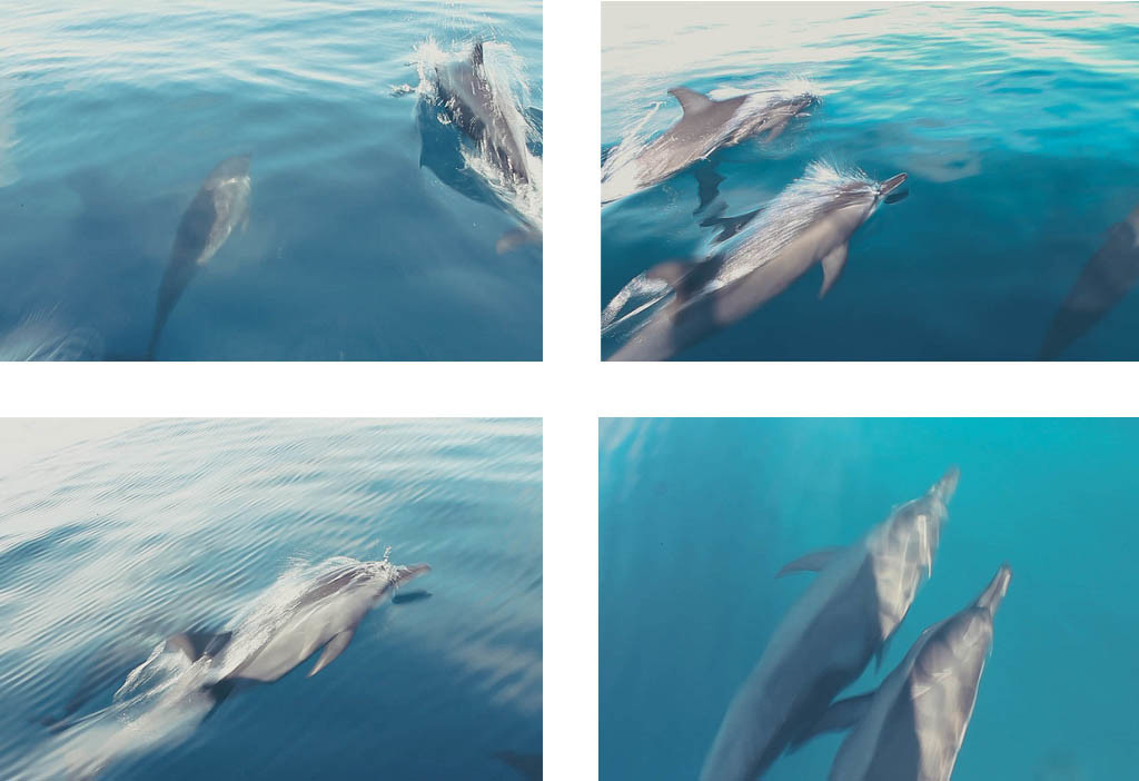 A lot more dolphins.