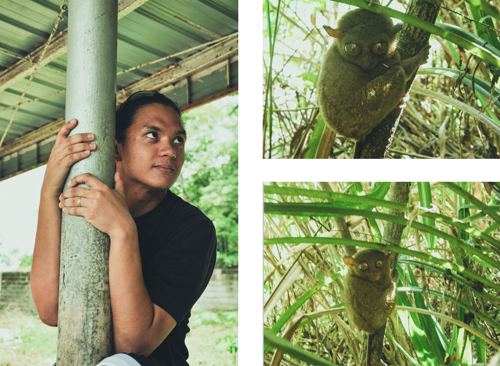Spot the real Tarsier