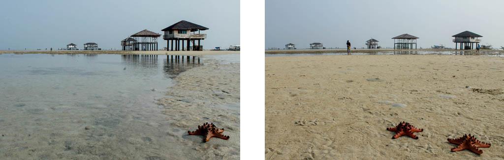 Starfish. Starfish everywhere.