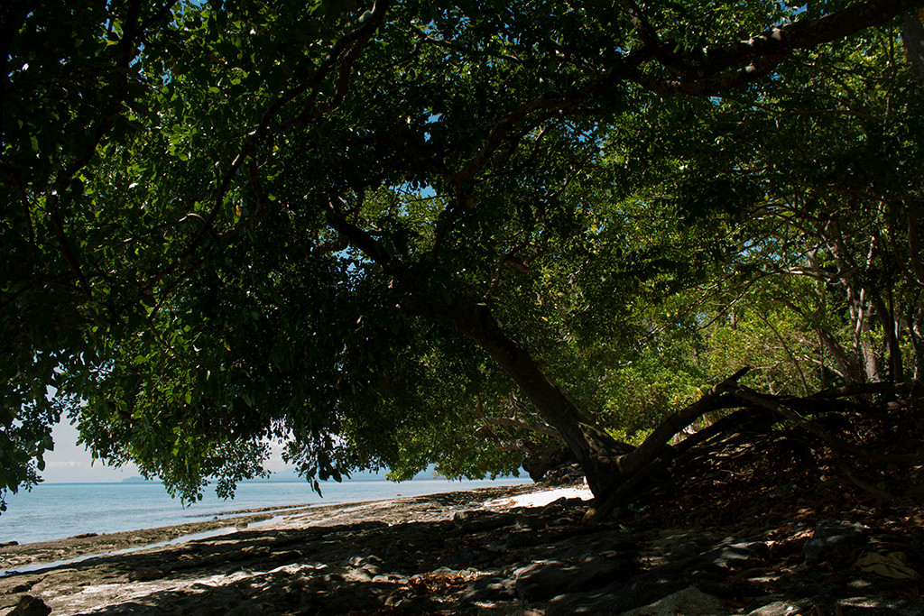Trees along the shoreline facing the protected marine sanctuary.