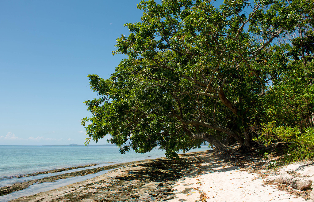 Trees along the shoreline at the other end of the island.