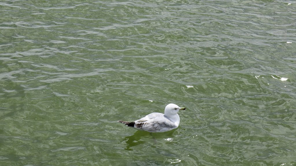 A lonely seagull