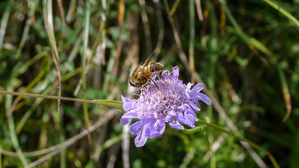 A hardworking bee.