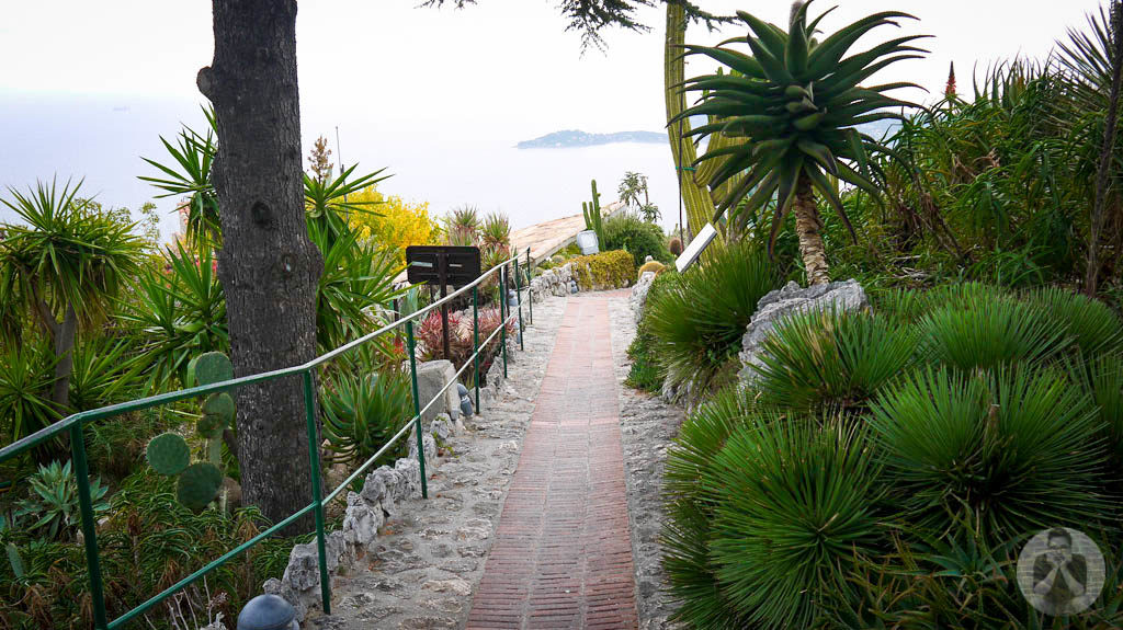 Pathway going up to the exotic garden